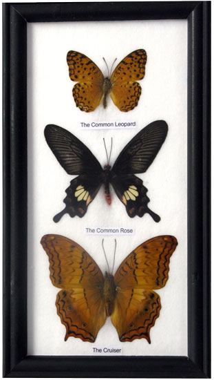 3 Butterfly Vertical Display
