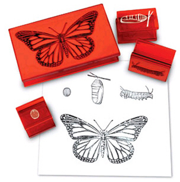 Butterfly Life Cycle Rubber Stamps