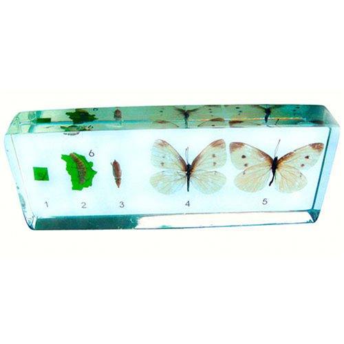 Butterfly Kits: Live Butterflies, Caterpillars / Larvae ...