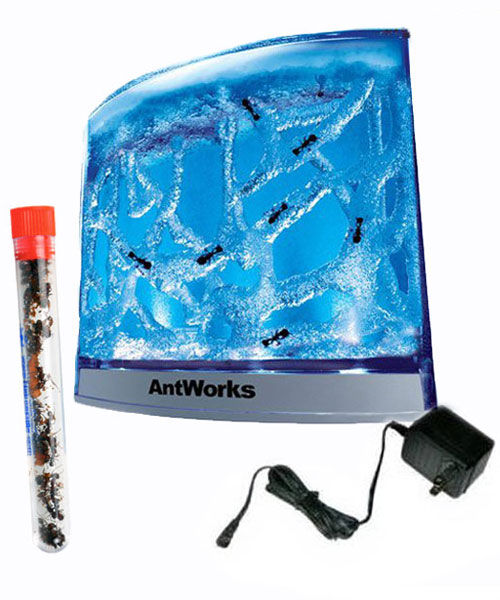 LIGHTED AntWorks Ant Habitat – Blue SHIPPED WITH LIVE ANTS
