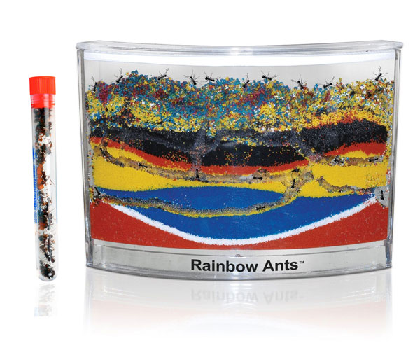 'Rainbow Ants' Colored Sand Ant Habitat SHIPPED WITH LIVE ANTS