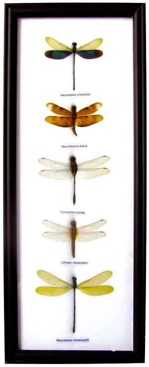 Real Dragonfly Art Work