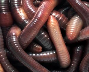 3810-worm-farm-l