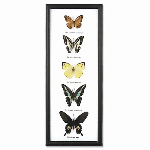 5 Butterfly Vertical Display