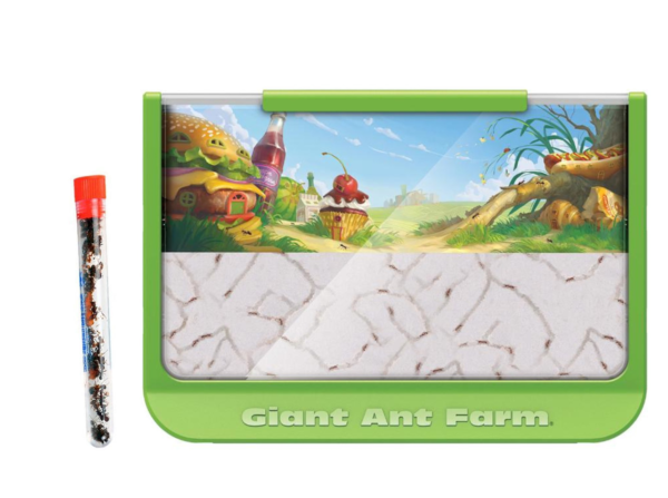 Giant-Ant-Farm-with-1-Tube-Ants–