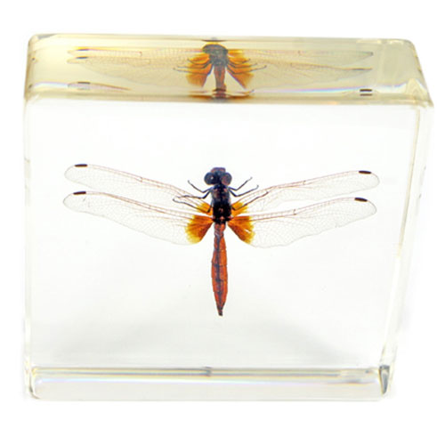 Real Dragonfly Paperweight