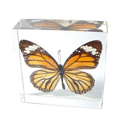 REAL BUTTERFLYS framed and mounted for Lovely Displays