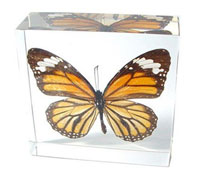 Butterfly Paperweight: Contains a REAL Monarch Butterfly!