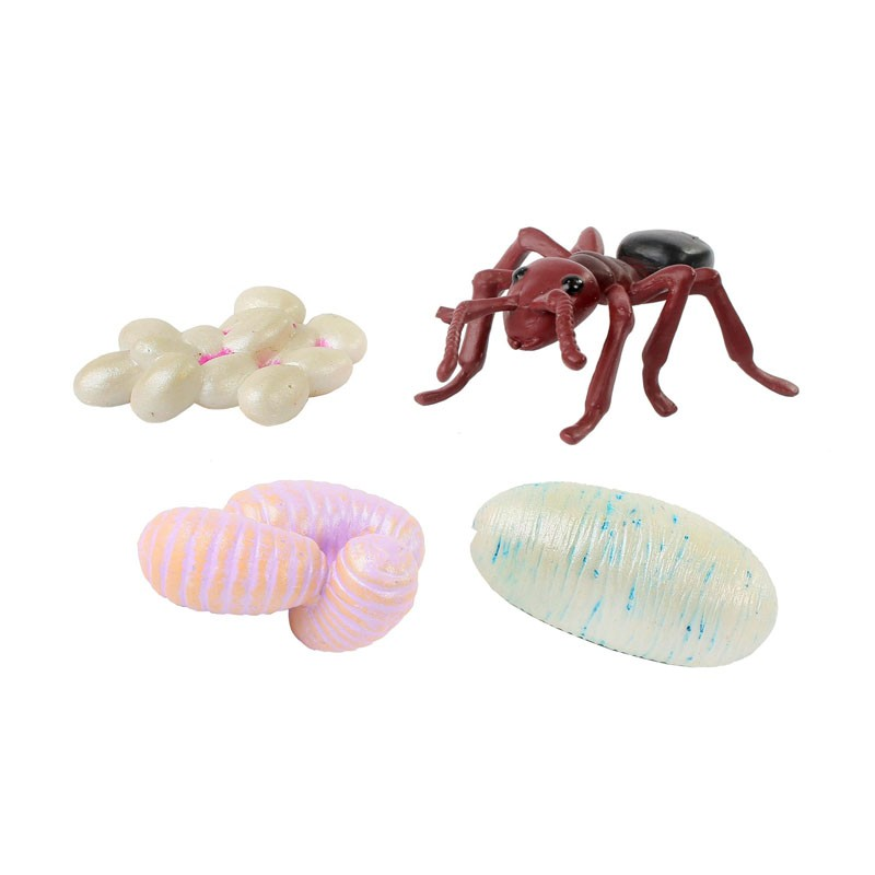 Ant Life Cycle Figurines