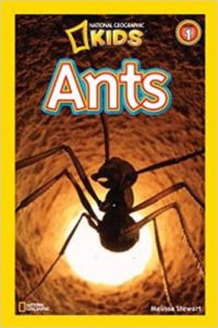 ants-book-national-geographic-kids-332×499-38145-200×300