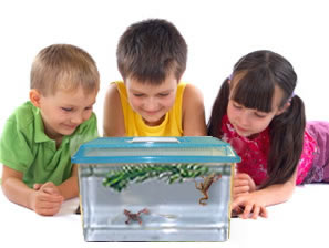 Frogs for sale with complete kits: Our aquatic African Dwarf Frogs come with Everything you need to keep your pet frogs happy and healthy. Optional extra frogs and ZebraFish can be added to your kit. Guaranteed live delivery!