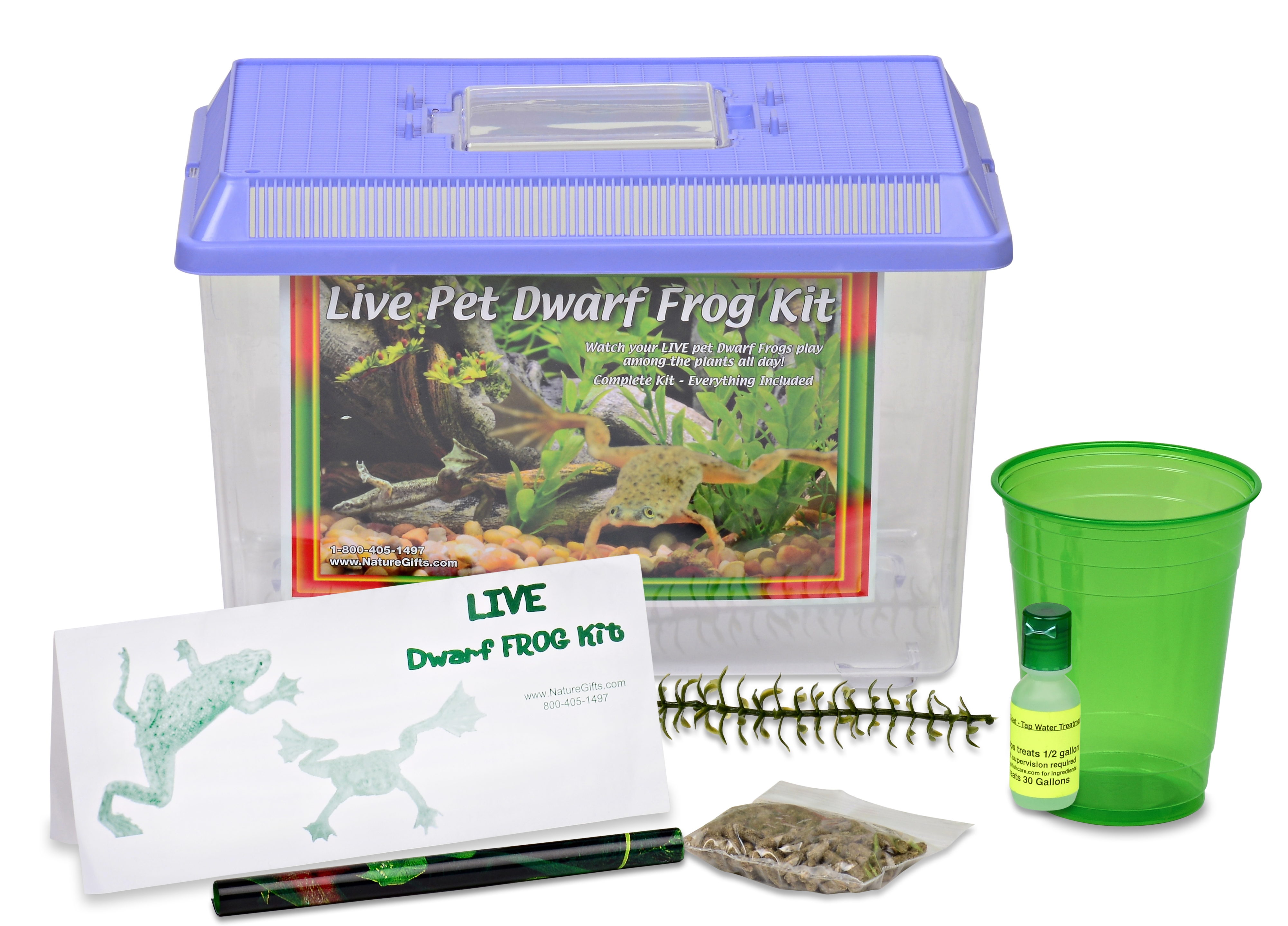 LIVE Pet Aquatic African Dwarf Frogs: Complete Kit