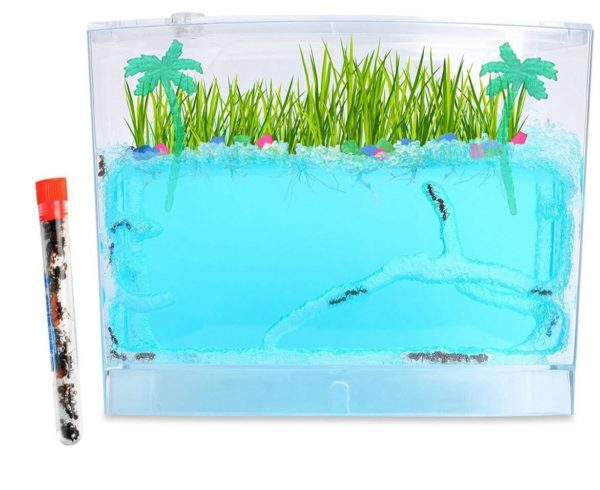 ecosystem-ant-habitat-with-1-tube-of-ants (1)