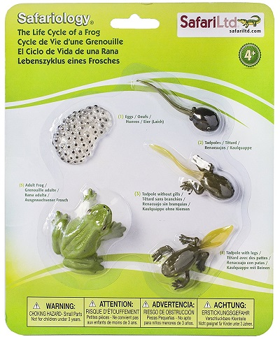 frog-life-cycle-figurines-400×485-09566
