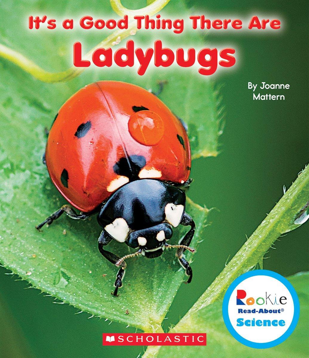 ladybug larvae the ladybug farm shows the whole life cycle