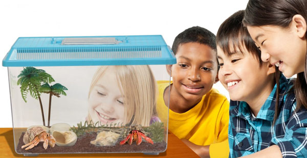 Pet Hermit Crabs Kit - everything you need to keep this fun pet!