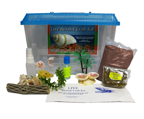 Live Hermit Crab Kit: with 2 Live Purple Pinchers