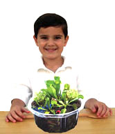 Our best selling Venus Fly Traps! Kits to grow bug-eating Venus Fly Traps are fun gifts and educational too.