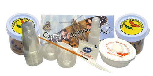 "School Size ""Butterfly Kit"""