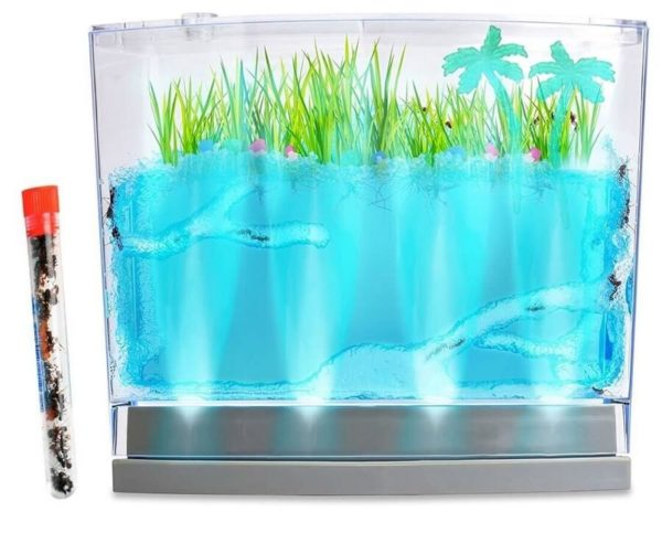 lighted-ecosystem-ant-habitat-with-1-tube-of-ants
