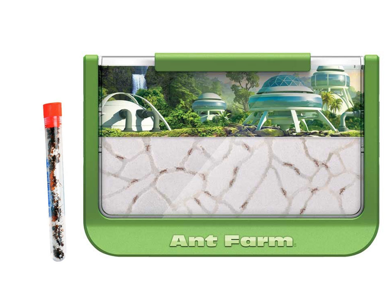 Green Rainforest Ant Farm With 1 Tube of Ants