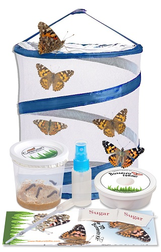 butterfly-kit-with-5-caterpillars-and-small-popup-habitat-1-363x500_480