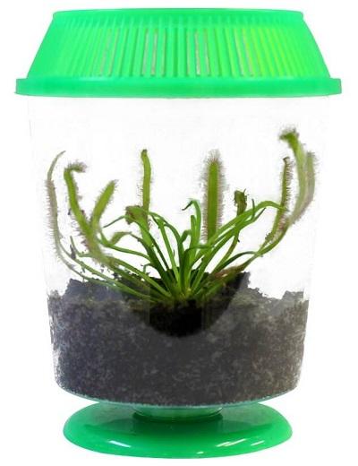 cape-sundew-terrarium
