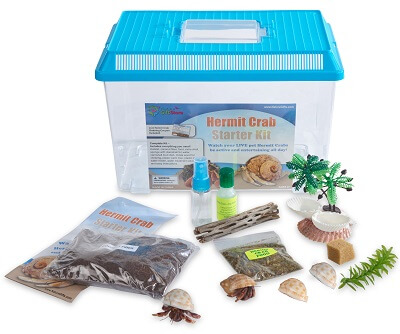 hermit-crab-starter-kit-with-2-live-crabs-400×351-72442
