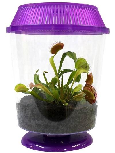 venus-flytrap-terrarium