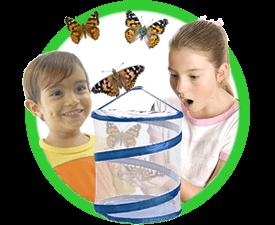 Live Butterfly Kits