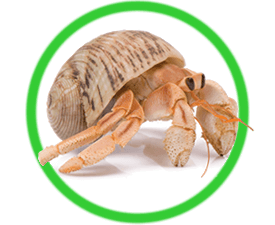 Live Hermit Crab Kits