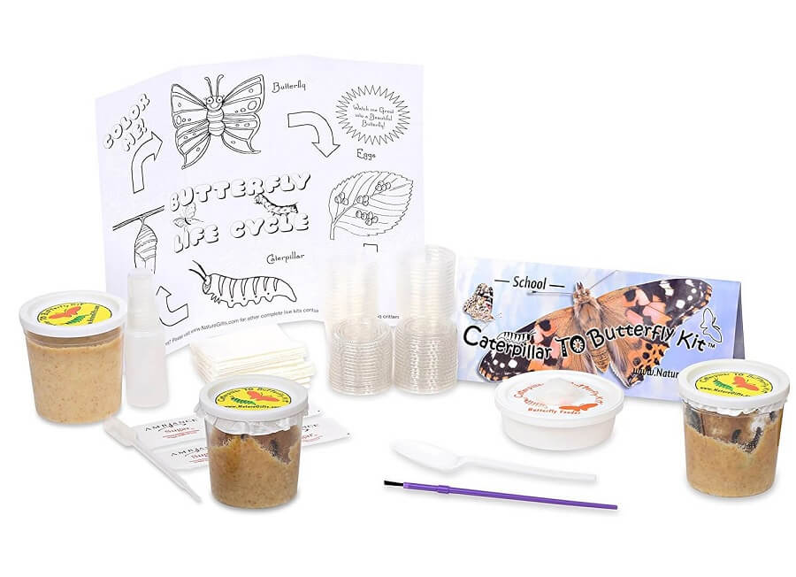 Butterfly School Kit