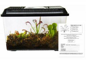Live Carnivorous Plants Kit